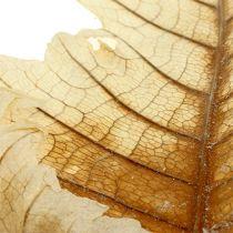 Feuille de chêne blanchie 35p