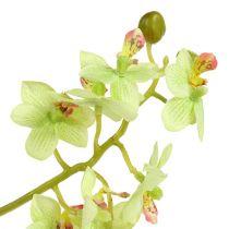 Orchidée 93 cm vert clair