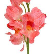 Orchidée Mokara en couleur saumon 50cm 6P