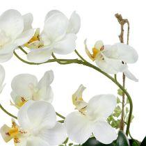 Orchidée Phalaenopsis à suspendre H. 26 cm crème