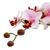 Orchidée rose en pot de céramique 31cm