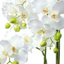 Orchidée blanche avec globe 110cm