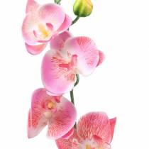 Orchidée rose 2 branches 60 cm