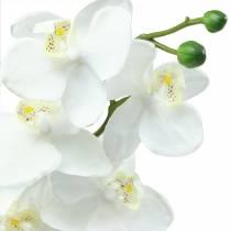 Orchidée blanche 77cm