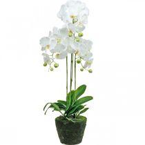 Orchidées artificielles pour le pot blanc 80cm