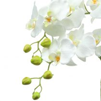 Orchidée blanche sur boule de terre 65cm