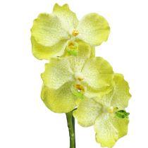 Orchidée avec racines vert clair L43cm