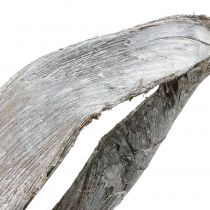 Palm Sing blanchi 110 cm