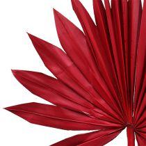 Palmspear Sun mini rouge 50pcs