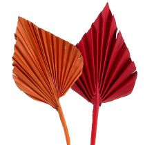 Palmspear assortis rouge / orange 50pcs