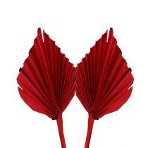 Palmspear mini rouge 100p