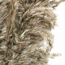 Herbe de pampa séchée naturelle Pour le séchage du bouquet 70-75cm 6pcs