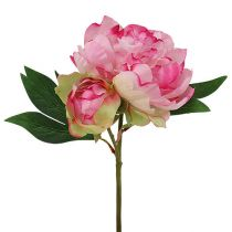 Rose de Pentecôte rose avec bourgeon L. 30 cm 2 p.