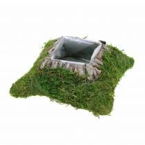 Coussin de plantation mousse, écorce 20cm × 20cm