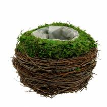 Bol à planter en rotin, mousse Ø16cm H11cm