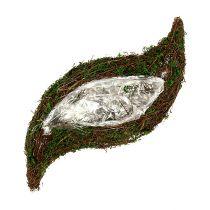 Vigne de vague végétale, mousse 45cm x 18cm H7cm