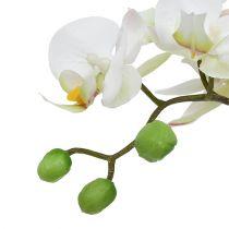 Orchidée Phalaenopsis crème en pot de céramique 33cm