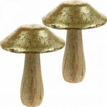 Champignon manguier doré, champignons décoratifs naturels grands Ø12cm H15cm 2pcs