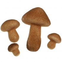 Mélange de champignons brun clair 2 - 8 cm 12 p.