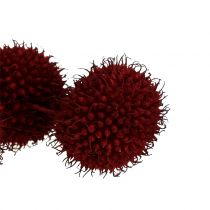 Fruits de platane séchés rouge foncé 250 g