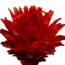 Plumosum 1 rouge 25p