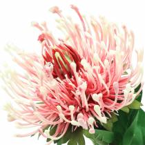 Protea Artificielle Rose 73cm