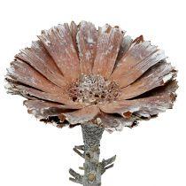 Rosace Repens 6-7cm blanchie à la chaux 25pcs