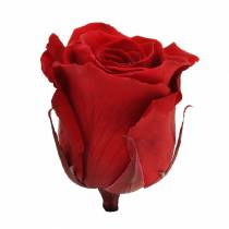 Roses infinies grandes Ø5.5-6cm rouges 6pcs