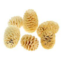 Cônes de Sabulosum blanchis 500 g