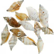 Coquilles d'escargots décoratives vides dans un filet de dégagement Escargots de mer 400g