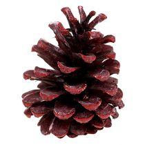 Cônes de pin noir rouge givré 5-7 cm 1 kg
