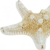 Décoration de table maritime Starfish Nature 5-8cm Real Starfish 20pcs