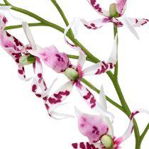 Orchidée Brassia rose vif et blanche 108cm 3P