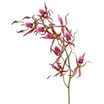 Orchidée Brassia rose vif et orange 108cm 3P