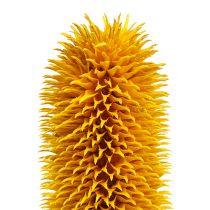 Cardères piquantes jaunes 1 kg