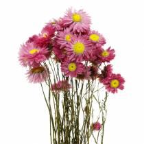Fleur de paille en bouquet Fleurs séchées roses 25g