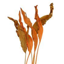 Feuilles de strelitzia jaune-orange 120 cm 20 p.