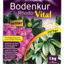 Substral Bodenkur Rhodo-Vital 1kg_fr