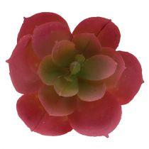 Succulente Ø5cm Rose 6P