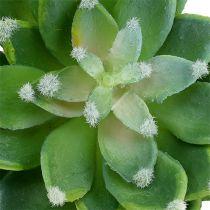 Succulentes Echeveria vert Ø10cm H11cm 3P