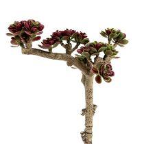 Succulente L 20cm vert-violet