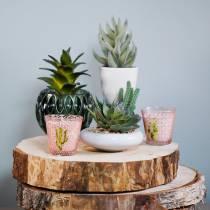 Succulente verte en pot 17 cm
