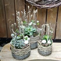 Plante succulente artificielle verte 27cm