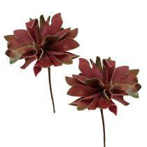 Succulentes rouge foncé Ø10cm 12pcs