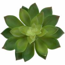 Joubarbe succulente verte 14cm