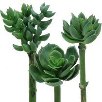 Lot de trois succulentes 11 cm