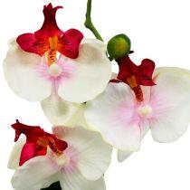 Déco de table orchidée en pot crème H 29 cm