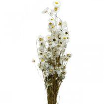 Fleurs séchées Acroclinium Fleurs blanches Fleurs séchées 60g
