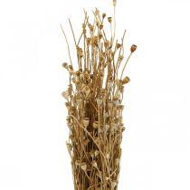 Capsules de pavot de fleurs séchées Lot de décoration de séchage sauvage séché naturel 100g