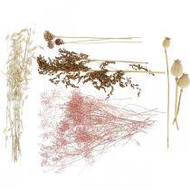 Boîte de fleurs séchées Ensemble de fleurs séchées mélangées blanc-rose